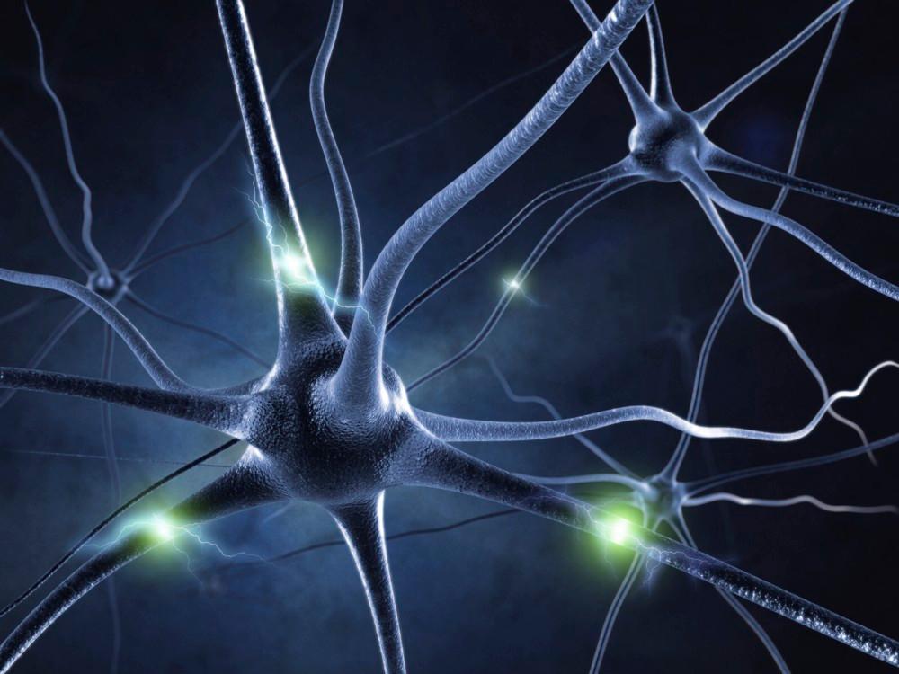 sistema nervioso cannabis, cannabis, neurona, thc