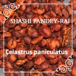 SHASHI PANDEY-RAI