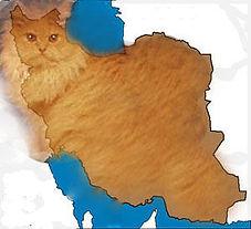 PersianCat ed.jpg