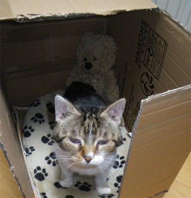 01 in box.jpg