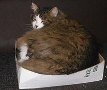 box too small.jpg