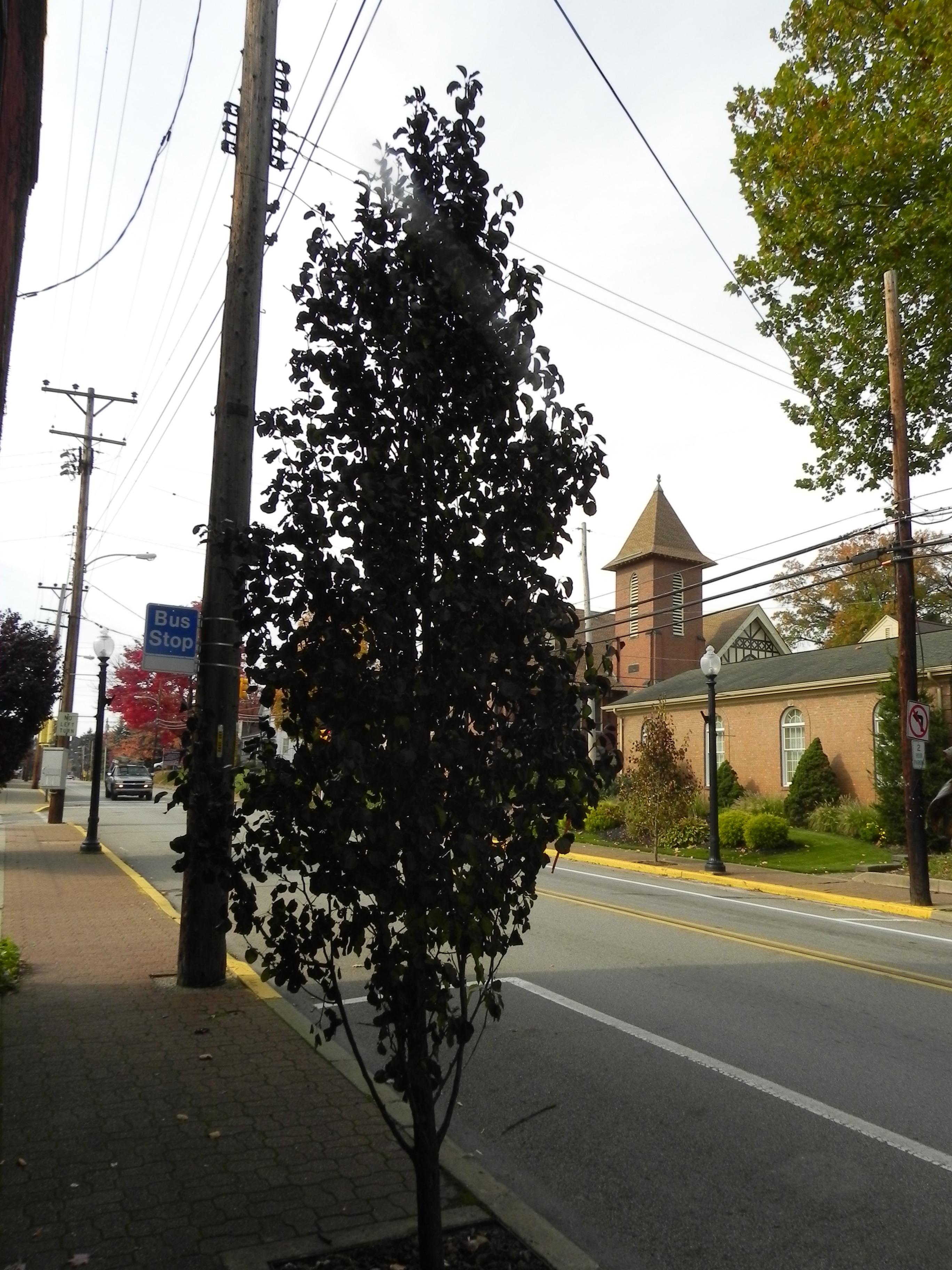 Tree sponsored by STAR