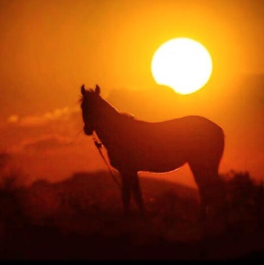 sunsethorse.png