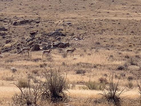 antelope Moab.JPG