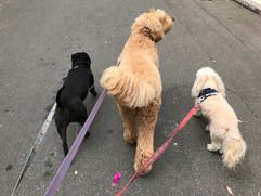 Group Walk