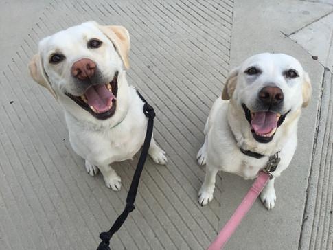 Roxy and Tucker