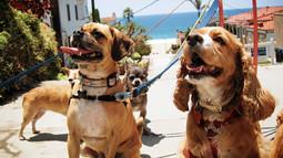 Group Dog Walk!