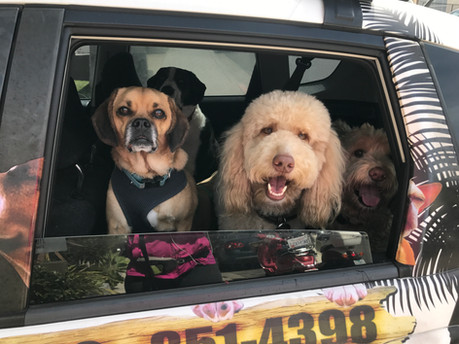 Hop In!