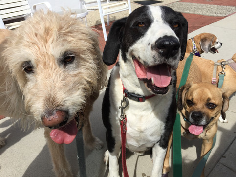Happy Pack!