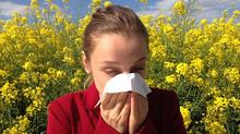 Compléments alimentaires à base de Produits de la ruche et Allergies