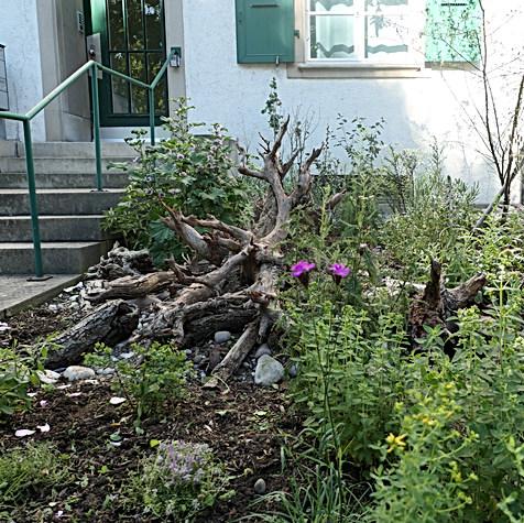 Vorgarten Naturnah