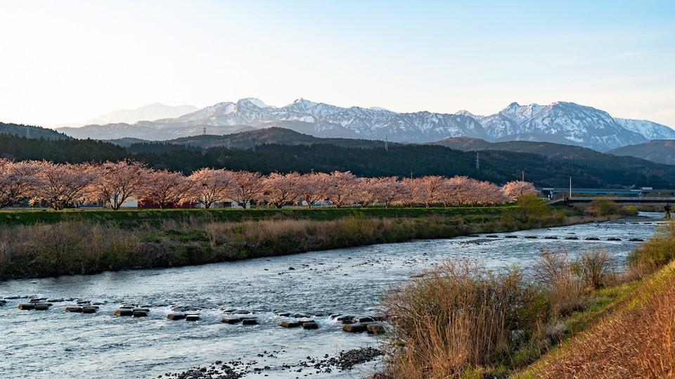「海川」と桜並木
