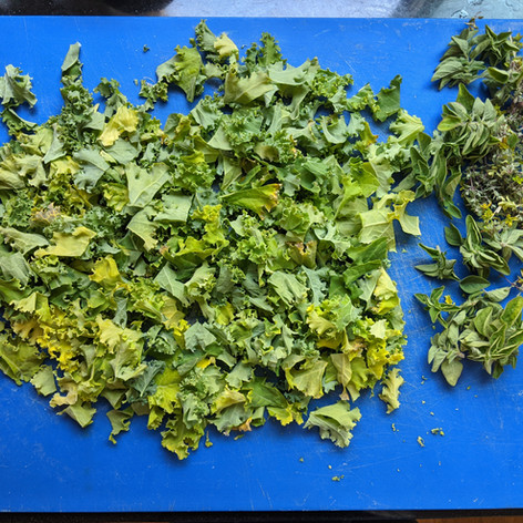 MTS kale and herbs.jpg
