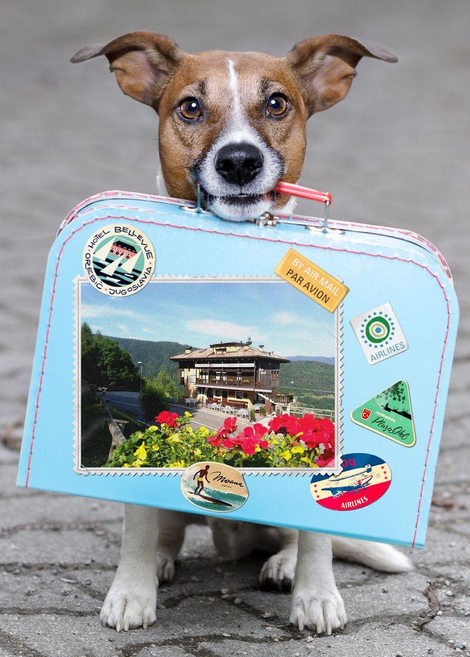maso sveseri, cani, bau beach, soggiorno, benvenuti, trentino