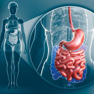 Como tu intestino afecta tu sistema inmune