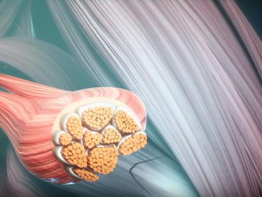 Medicina Funcional-tras la búsqueda del origen de ciertas neuralgias