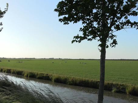 Culturele evenementen, kunst en cultuur, klassieke muziek - Peter de Grote in de polder