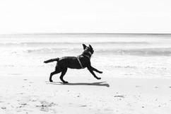 hundefotografie_mitliebeundlulu-3053.jpg