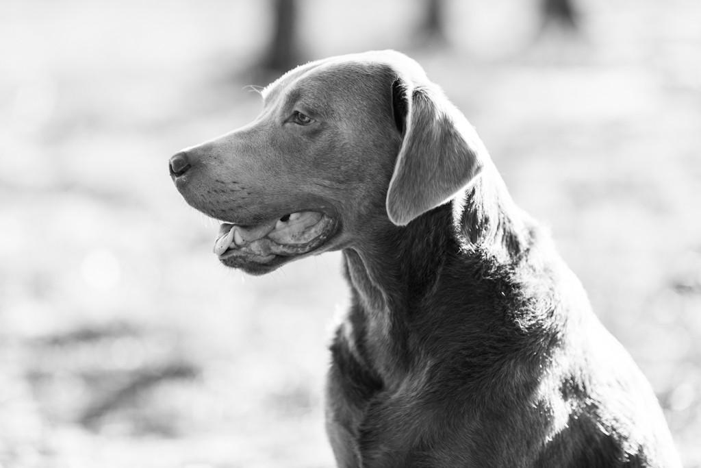hundefotografie_heike_moellers-2382-2.jp