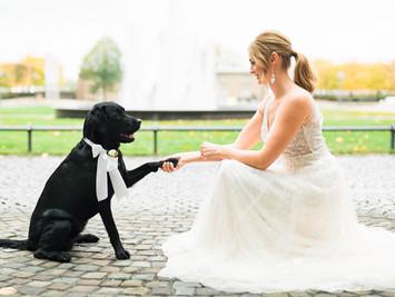 Hunde auf der Hochzeit?