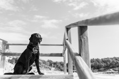 hundefotografie_mitliebeundlulu-2941.jpg