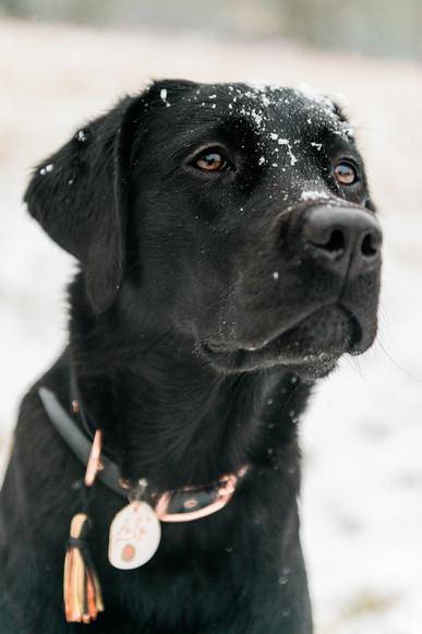 hundefotografie_heike_moellers-0216.jpg