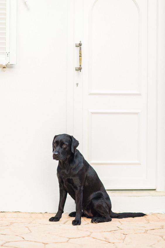 hundefotografie_mitliebeundlulu-2781.jpg