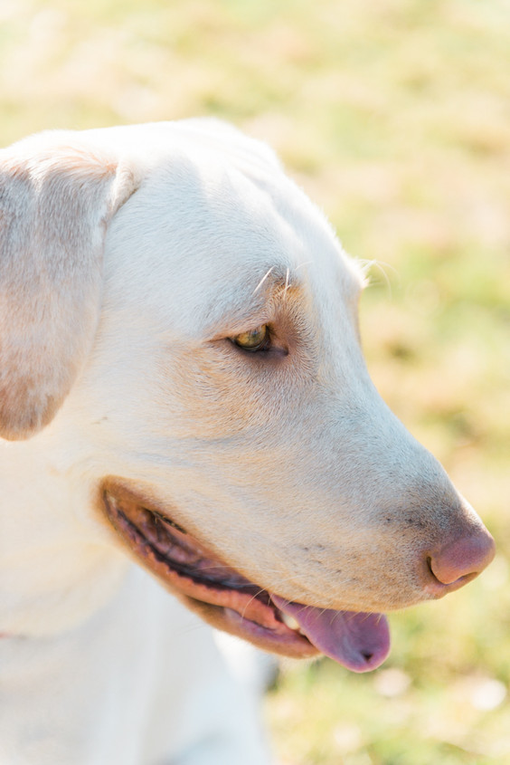 hundefotografie_heike_moellers-0366.jpg