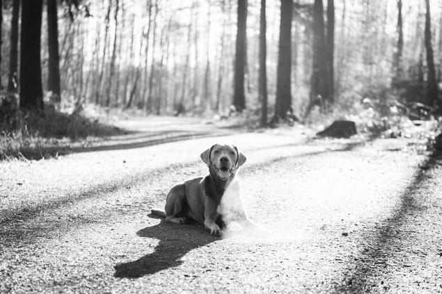 hundefotografie_heike_moellers-2366-2.jp