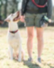 Hundefotografie Outdoor