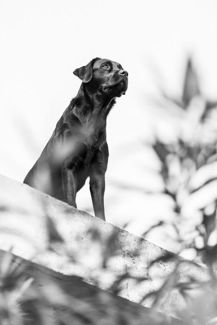 hundefotografie_mitliebeundlulu-2762-2.j