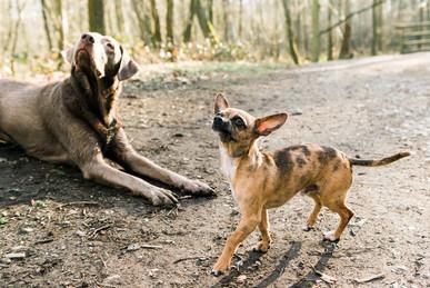 hundefotografie_heike_moellers-2643.jpg
