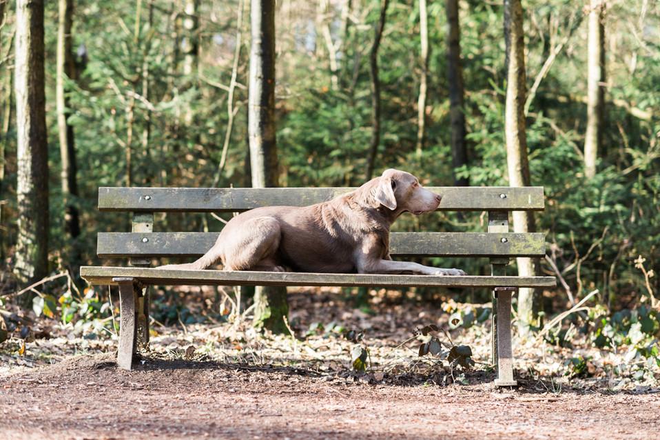 hundefotografie_heike_moellers-2459.jpg