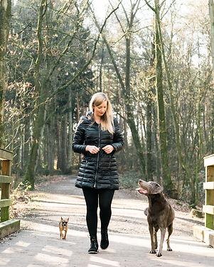 Gruppenfotografie Hunde