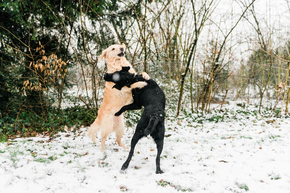 hundefotografie_heike_moellers-0225.jpg