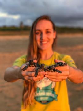 Filhotes de tartaruga cabeçuda