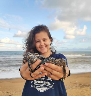 Filhotes de tartaruga de couro