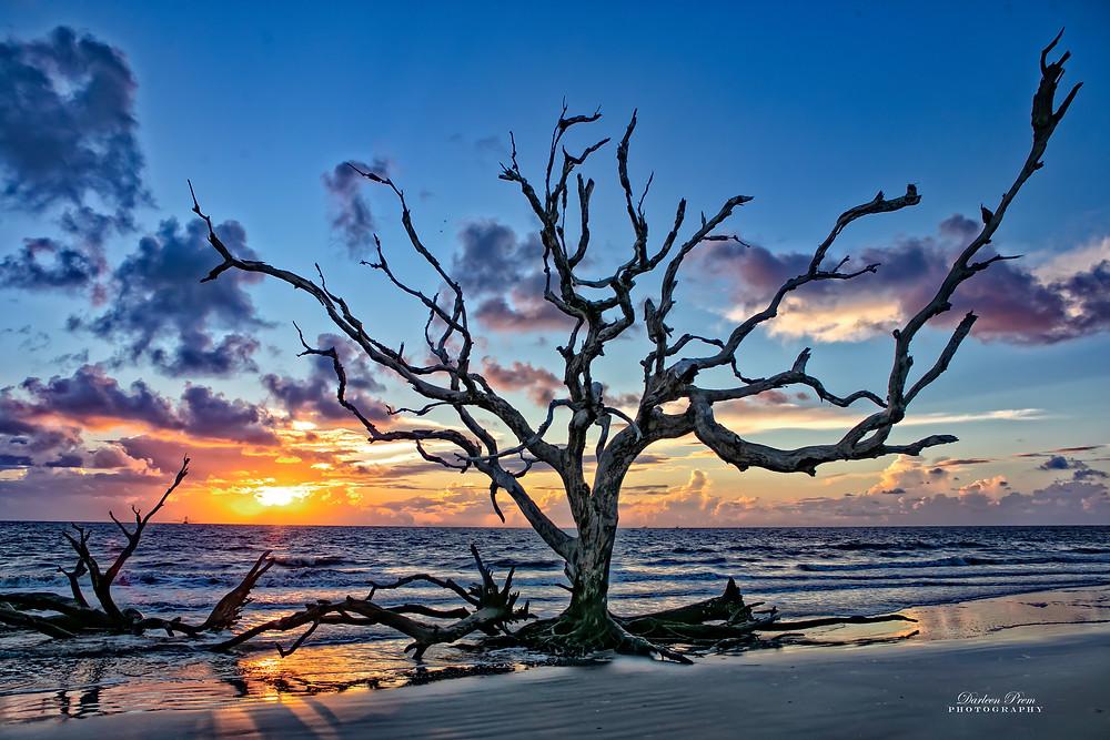 Sunrise at driftwood beach