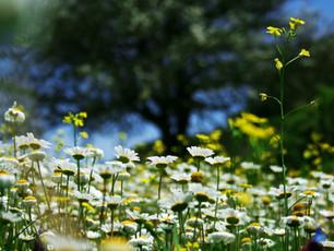Frühling im Inland