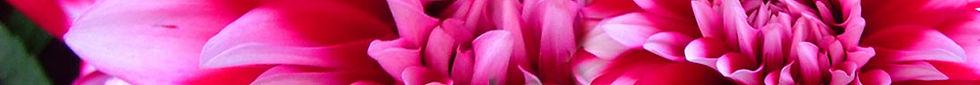 flower-banner10b.jpg