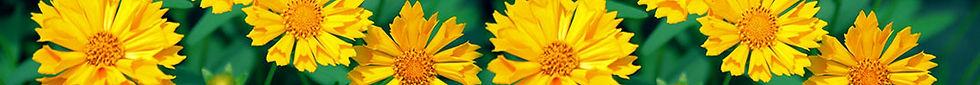 flower-banner8.jpg