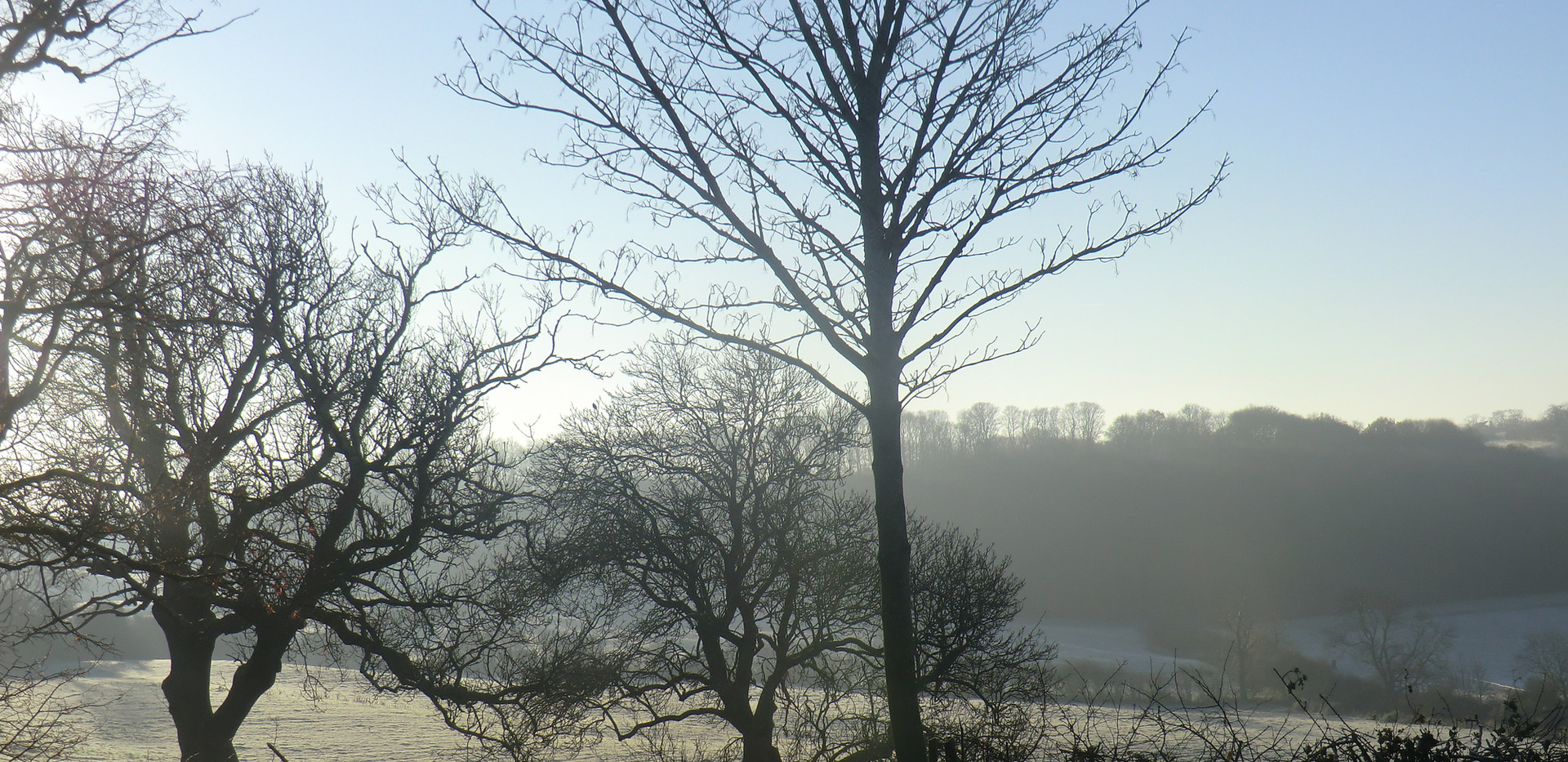View towards Dingley Wood