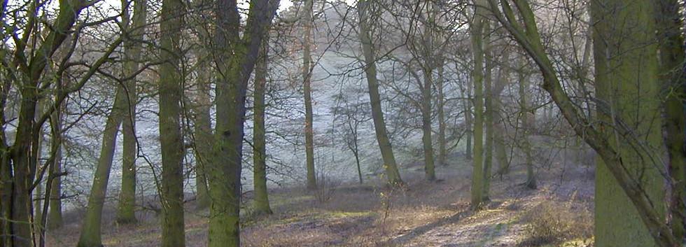 Sand Pit Wood