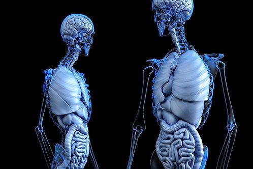 What Do My Organs Do?
