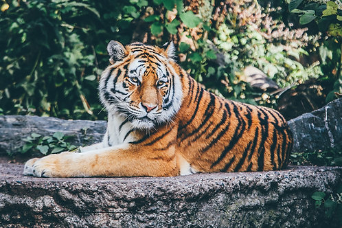 Should Animals Be Kept in Zoos?