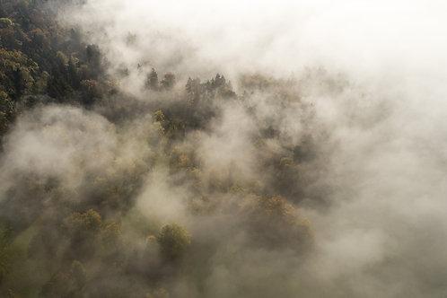 Cloudforest