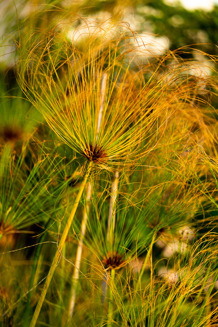 sicily-nature-plants-3.jpg