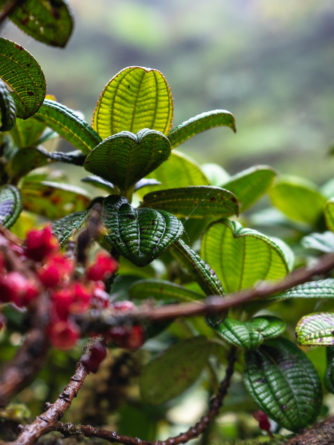 rainforest-antilles-caribbean-jardin-bal