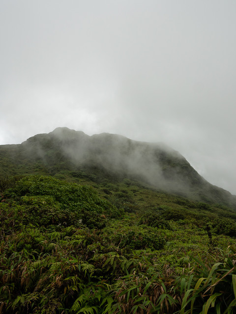 rainforest-nature-plants-flowers-2.jpg