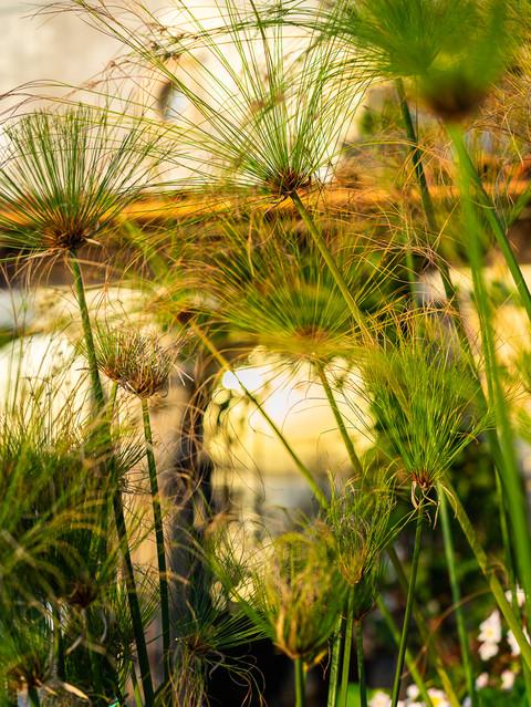 pierre-caudevelle-sicily-italy-nature.jpg
